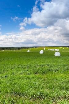 Ein landwirtschaftliches feld, auf dem im winter das gras geerntet wird. grasballen in zellophan