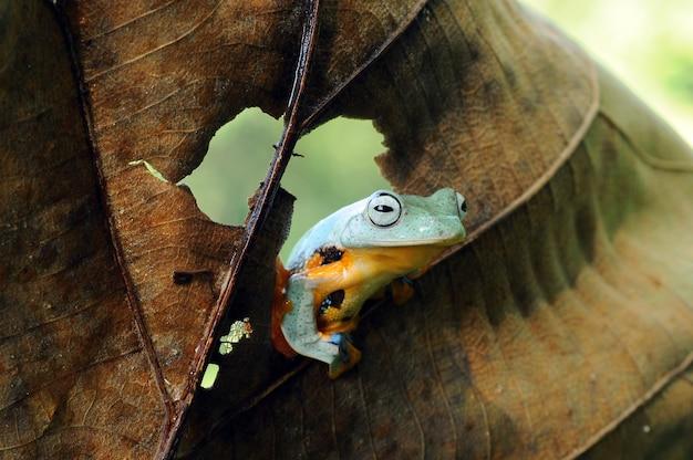 Ein laubfrosch auf einem blatt ein laubfrosch frosch