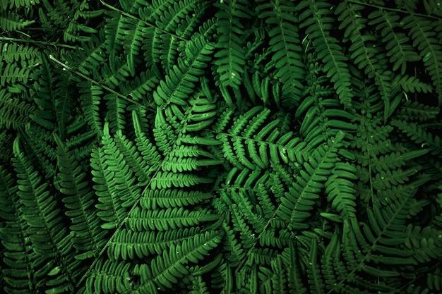 Ein layout von grünen blättern