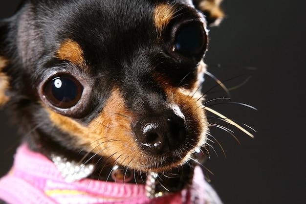 Ein lustiger hund auf hauptinnenraum