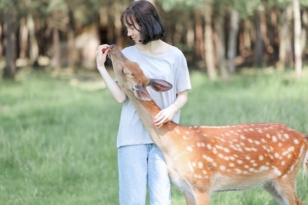 Ein mädchen füttert niedlichen gefleckten hirsch bambi im kontaktzoo. glückliches reisendes mädchen genießt im sommer geselligkeit mit wilden tieren im nationalpark.