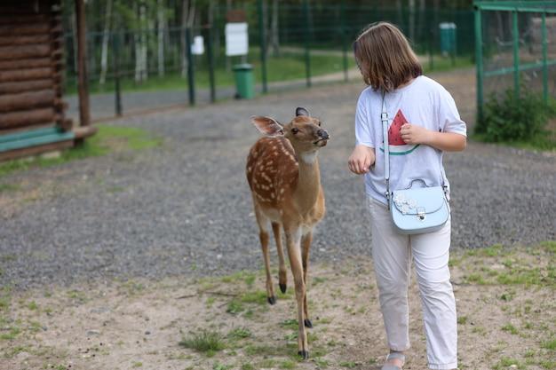 Ein mädchen füttert niedlichen gefleckten hirsch bambi im streichelzoo. glückliches reisendes mädchen genießt im sommer geselligkeit mit wilden tieren im nationalpark. rehkitzbaby spielt mit menschen im kontaktzoo