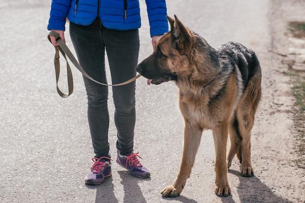 Ein mädchen geht mit ihrem hund auf die straße. freizeit mit einem haustier. spazieren sie mit einem deutschen schäferhund durch die stadt an der frischen luft.