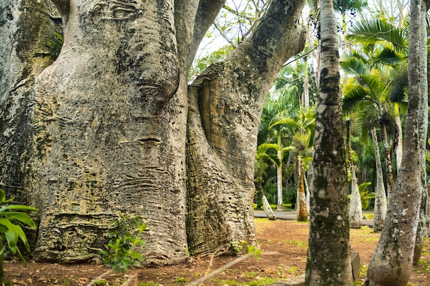 Ein mädchen neben einem baobab im botanischen garten auf der insel mauritius