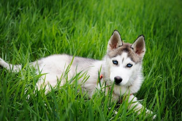 Ein mädchen und ihr hundeschlittenhund, die in einen park gehen