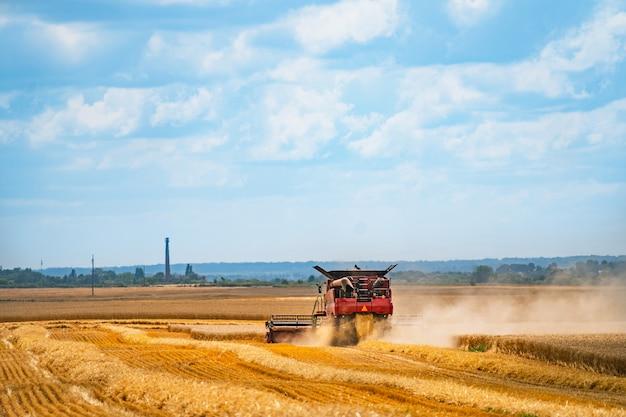 Ein mähdrescher erntet einen reifen ernteweizen mitten auf einem bauernhoffeld. erntezeit. landwirtschaftssektor