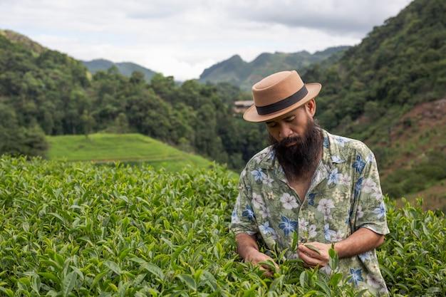 Ein männlicher bauer mit bart kontrolliert den tee auf dem bauernhof.