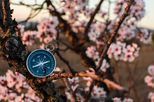 Ein magnetischer kompass in einem blühenden baum gegen.