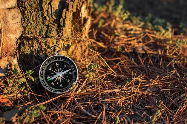 Ein magnetischer kompass in einem herbstwald gegen. blühender baum