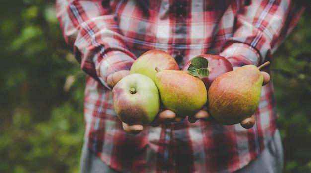 Ein mann hält eine ernte von äpfeln in seinen händen.