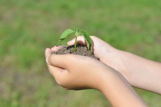 Ein mann hält einen in den boden gepflanzten sämling in der hand