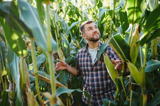 Ein mann inspiziert ein maisfeld und sucht nach schädlingen. erfolgreiches bauern- und agrounternehmen