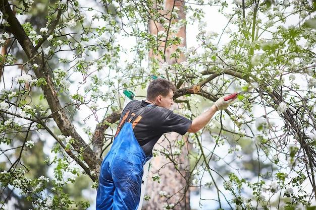 Ein mann mit einer säge schneidet im garten einen zweig eines blühenden apfelbaums.