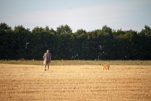 Ein mann und ein hund laufen über ein gemähtes weizenfeld, eine goldene stoppel nach der ernte.