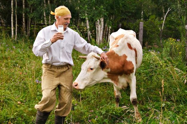 Ein mann weidet eine kuh auf einer grünen wiese. rinder fressen gras. der bauer trinkt milch aus einem glas. gesundes essen: dorfmilch. ein rentner kümmert sich um das vieh