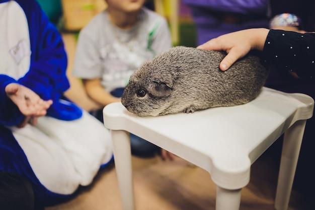 Ein meerschweinchen sitzt auf einem strohhalm neben einer krippe.