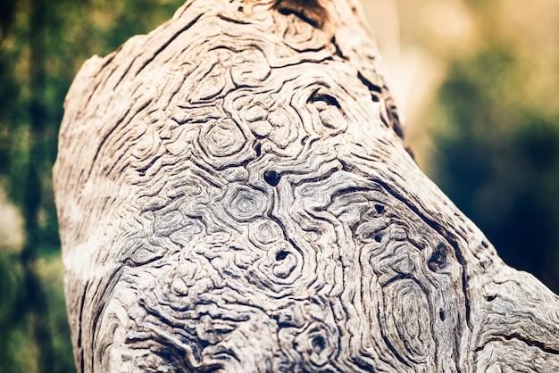 Ein meisterstück der natur. nahaufnahme eines schönen stück stammes mit natürlicher beschaffenheit.