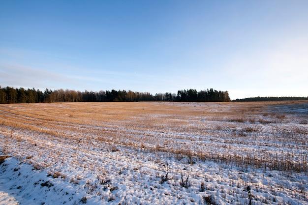 Ein mit schnee bedecktes feld treibt kleines wort. wintersaison, landschaft.