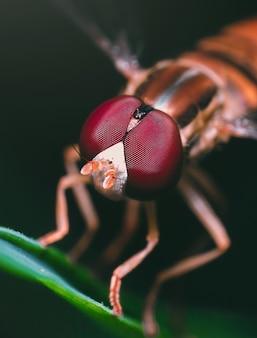 Ein netzflügeliges insekt auf einer grünen pflanze mit einer verschwommenen wand