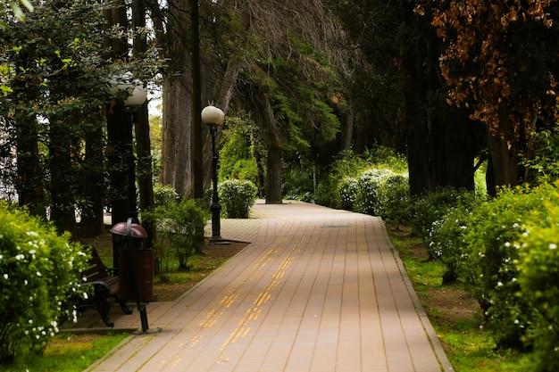 Ein neuer wanderweg, ein schöner weg mit bäumen zum laufen oder spazierengehen und radfahren, entspannen sie im park auf dem grünen rasen neben dem feld. das konzept der ökologie und der menschlichen interaktion mit der natur.