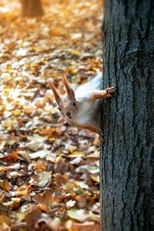 Ein neugieriges eichhörnchen sieht dich an, wie du auf dem stamm des baumes sitzt.