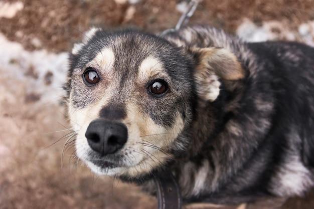 Ein niedlicher streunender hund sieht mit traurigen augen aus. von oben betrachten.