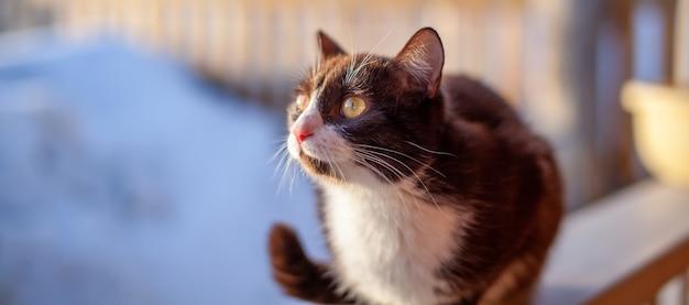 Ein niedliches kätzchen sitzt auf einem holzzaun draußen im winter. eine braune, flauschige katze sonnt sich im winter in der sonne.
