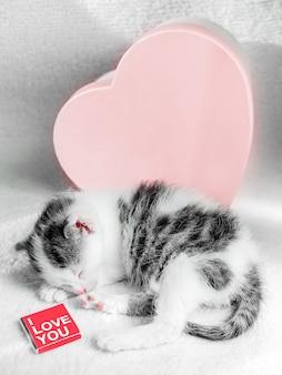 Ein niedliches kleines kätzchen schläft auf einem weißen teppich auf sonne nahe bonbonherzkasten mit schokolade. nette schlafenkatzennahaufnahme. geschenke zum valentinstag