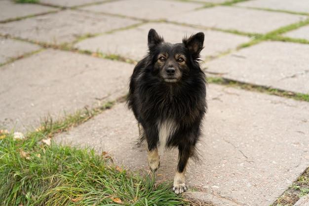 Ein obdachloser schwarzer straßenhund sieht einen mann an, der auf essen wartet.
