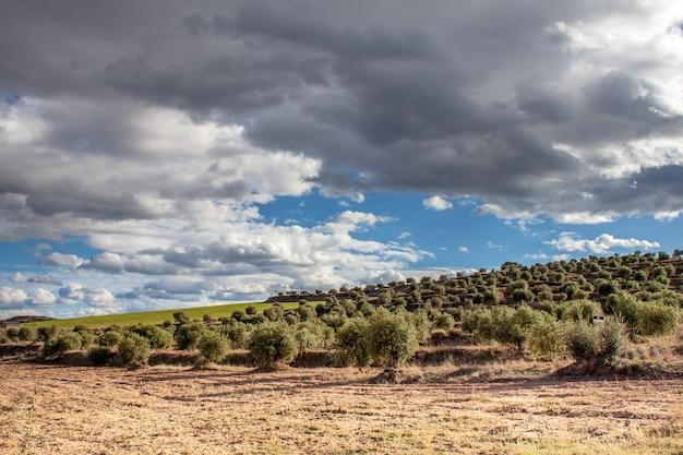 Ein olivenfeld an einem wolkigen tag