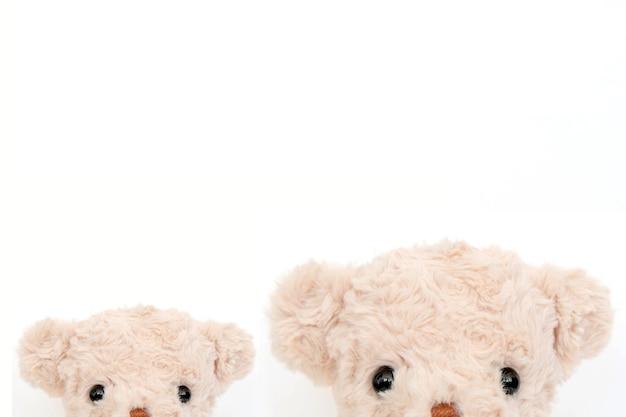 Ein paar niedliche teddybär auf weißem hintergrund.