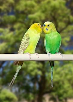 Ein paar papageien