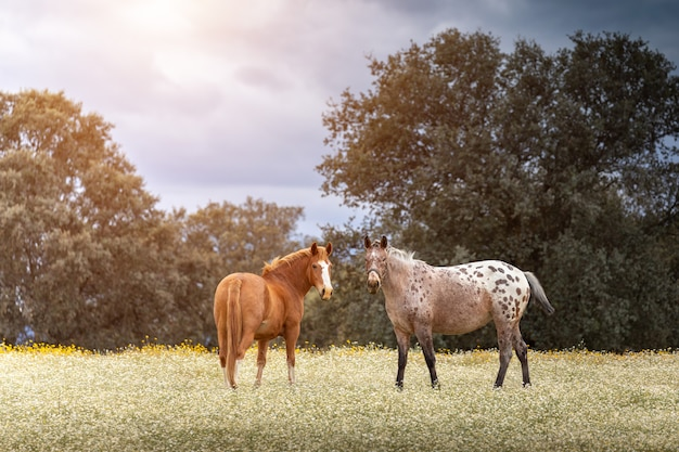 Ein paar pferde an einem sonnigen tag