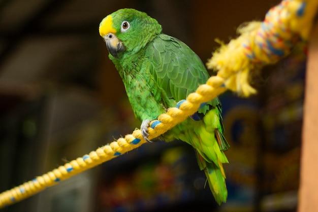 Ein papagei an einem seil