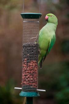 Ein papagei auf einer vogelzufuhr