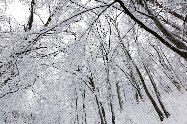 Ein park mit verschiedenen bäumen in der wintersaison