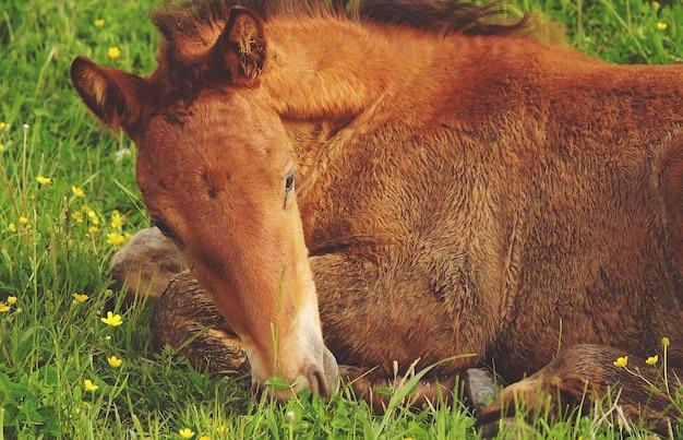 Ein pferd auf dem gras, sommerzeit