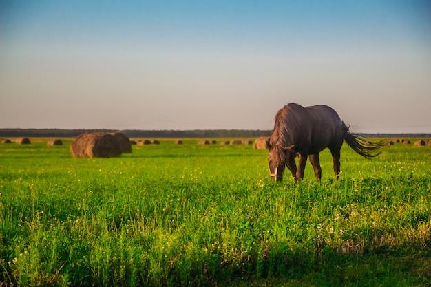 Ein pferd auf einer grünen wiese