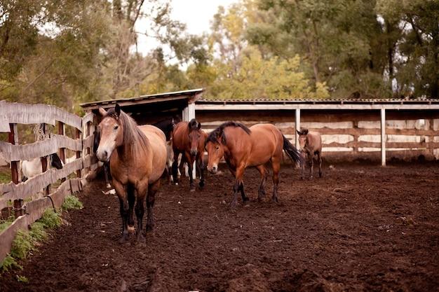 Ein pferd, das nahe einem alten holzzaun in einer pferdefarm steht