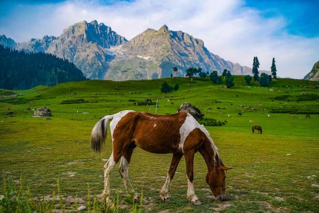 Ein pferd mit aussicht