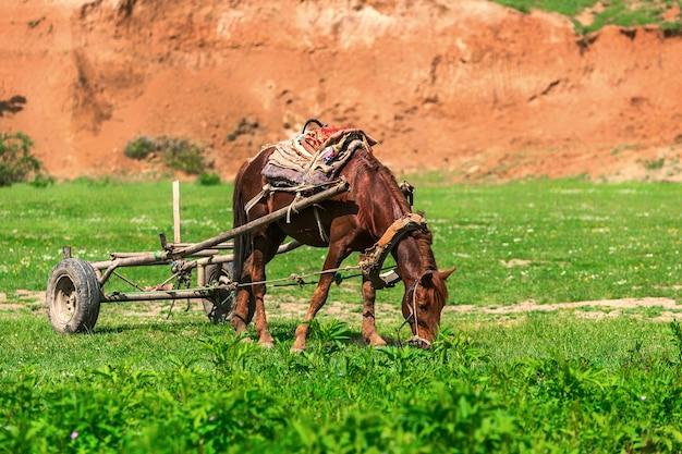 Ein pferd mit einem karren weidet