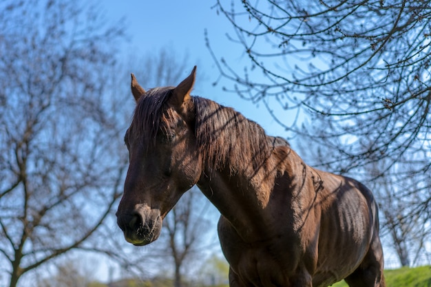Ein pferd steht gegen den himmel
