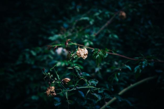 Ein pflanzenzweig, umgeben von viel grün