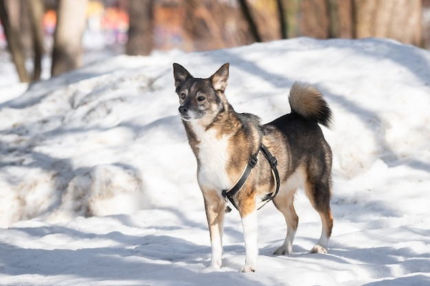 Ein porträt des großen mischlings streunenden hundes