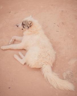 Ein porträt eines hundes