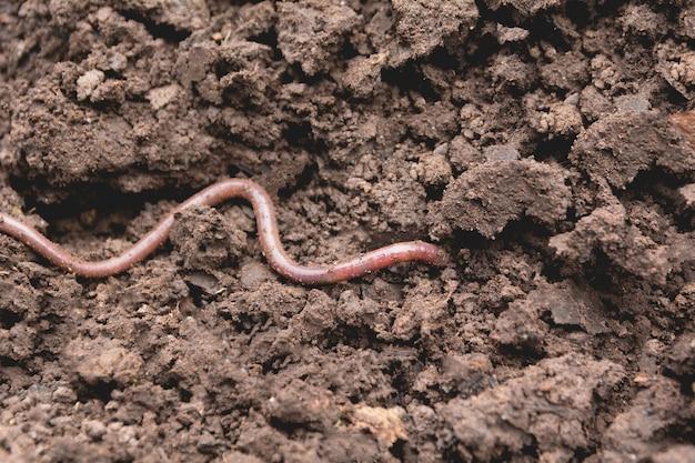 Ein regenwurm auf einem boden. regenwurm und gesünderer boden, der zum bepflanzen geeignet ist