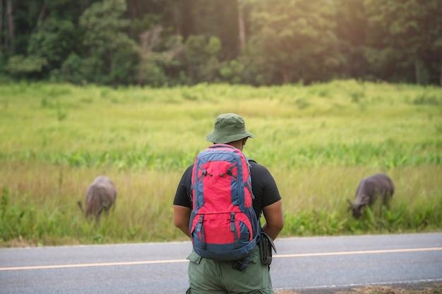 Ein reisender, der einen wanderrucksack trägt, beobachtet hirsche, die im wald grasen. wanderrucksacktouristen beobachten hirsche, die in einem tropischen wald im khao yai nationalpark, thailand grasen.
