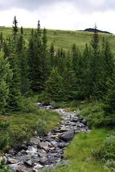 Ein schmaler fluss voller felsen, umgeben von wunderschönen grünen bäumen in norwegen