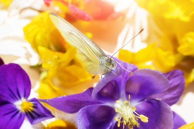 Ein schmetterling sitzt auf einer lila blume andere blumen eines blumenstraußes. festliches niedliches makro helles foto.