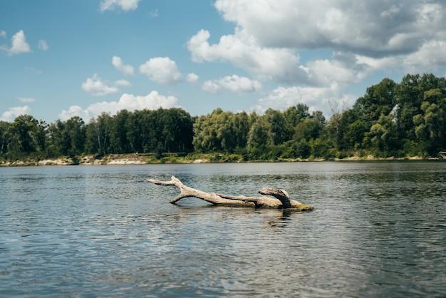 Ein schöner baumstumpf schwimmt im fluss mit einer herrlichen aussicht. blauer himmel mit wolken, ruhigem fluss und wald am ufer. foto in hoher qualität
